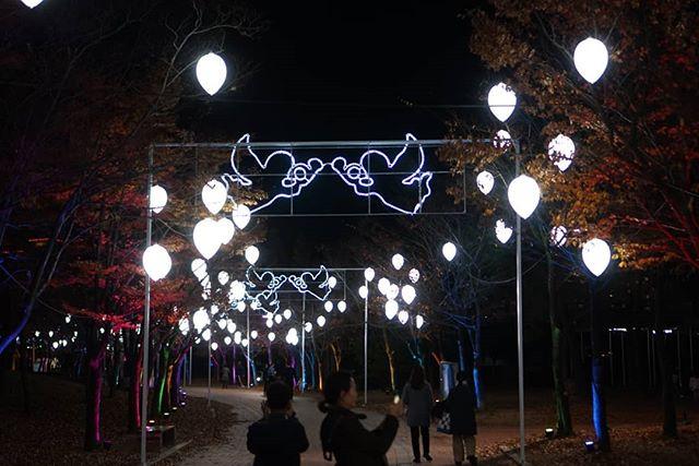 2019年12月海雲台(ヘウンデ) リバークルーズ LEDフェスティバル 画像