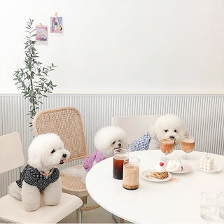 仁川空港(インチョン)から行けるカフェまとめ!仁川エリアはNEWホットスポット!